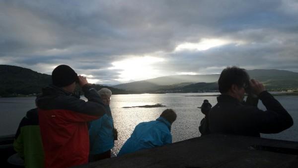 Group watching wildlife
