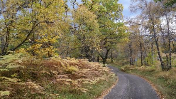 Glenloy autumn colours