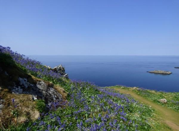 Bluebells, Treshnish Isles