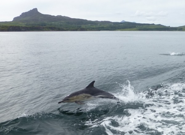 dolphin and eigg