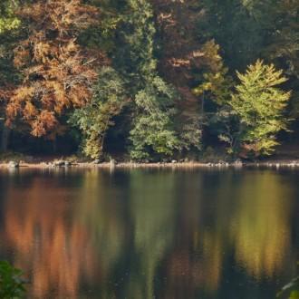 Autumn leaves Loch Oich
