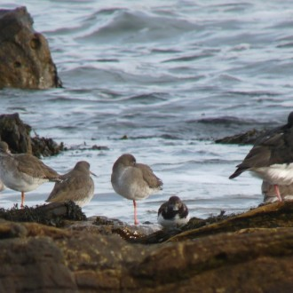 waders on the shore