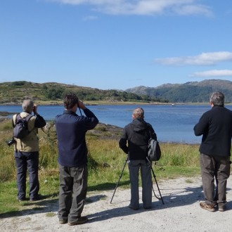 watching wildlife loch Sunart