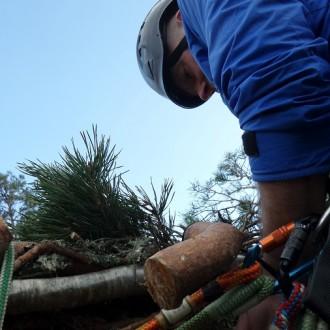 lewis busy building osprey platform