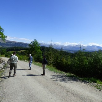 Group looking for butterflies on forest track