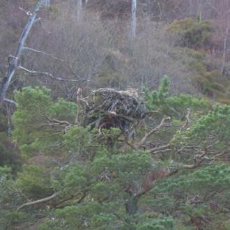 empty osprey nest