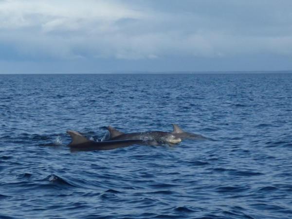 cromarty dolphins
