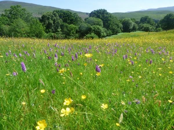 Glen Roy meadow