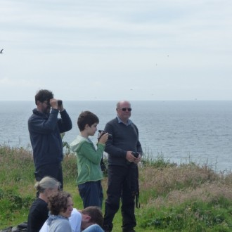 Watching puffins on Lunga